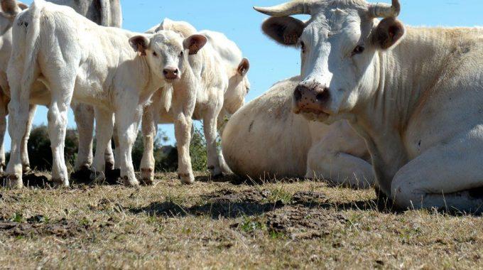 Apakah Pembahagian Daging Korban Yang Afdal?
